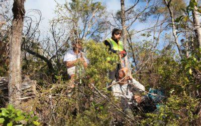 Volunteer Planting Photos for June 2017
